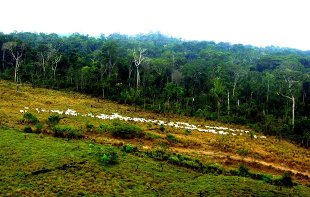 Foto: Amazonia.org