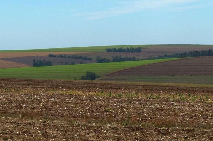 Foto: Rural Pecuária
