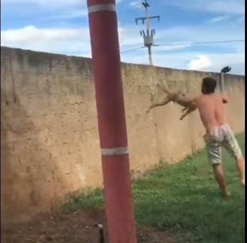 Placas: Homem é detido após jogar cachorro por cima do muro