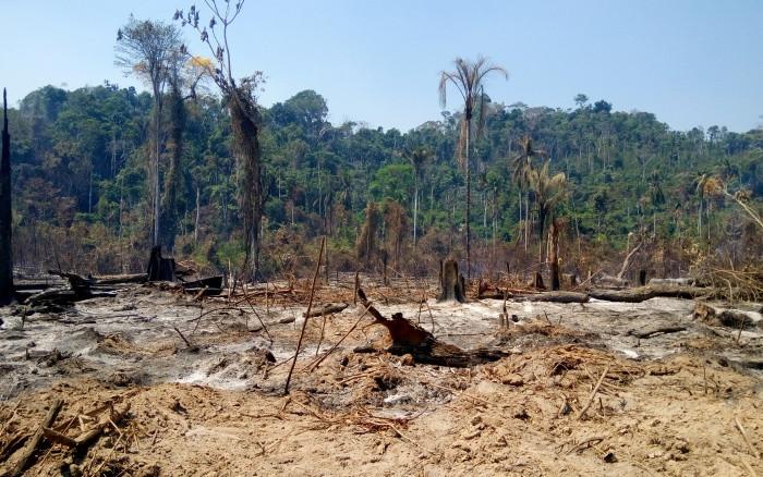 A cada minuto, 533 árvores são derrubadas no Xingu