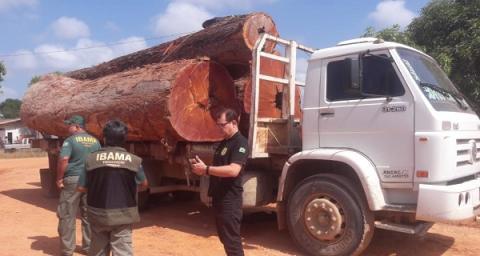 Polícia Civil participa da operação Ucuuba para coibir práticas de crimes ambientais em Anapu no Pará