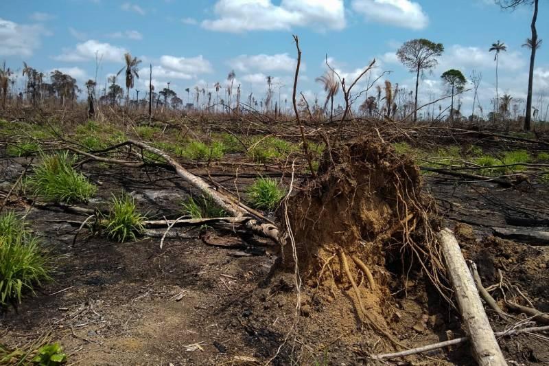 Operação combate desmatamento ilegal em Área de Proteção Ambiental