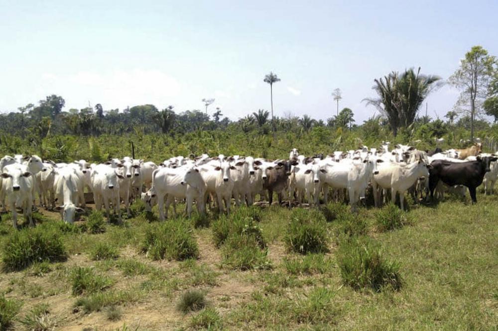 Pará combate o desmatamento ilegal com mais de mil áreas rurais regularizadas